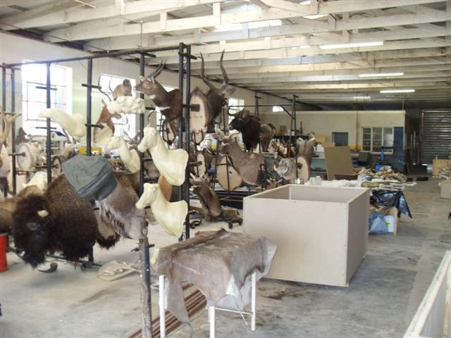 Taxidermy and Trophy Exporting